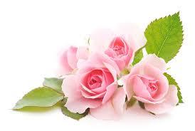 las flores mas hermosas del mundo imágenes de rosas