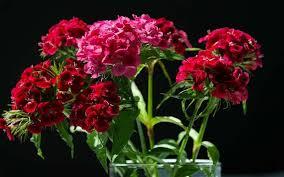 las flores mas hermosas del mundo imágenes romanticas
