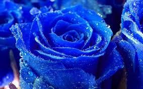 las flores mas hermosas del mundo imágenes rosas azules