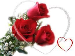 rosas hermosas rojas para enamorados