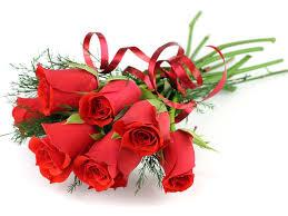 rosas hermosas rojas para regalar