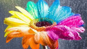 Flores para fondo de pantalla de colores