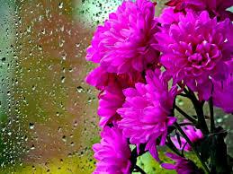 Flores para fondo de pantalla romanticas