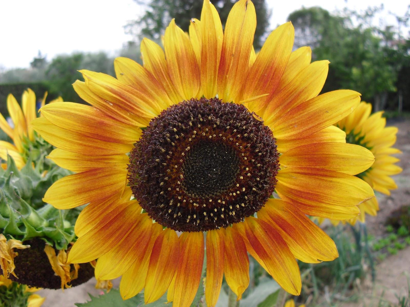 Hermosas Imágenes De Flores Naturales Para Compartir