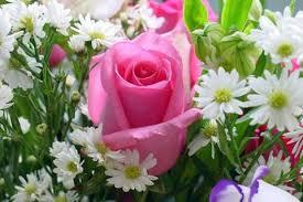 Imágenes de amor con rosas para regalar