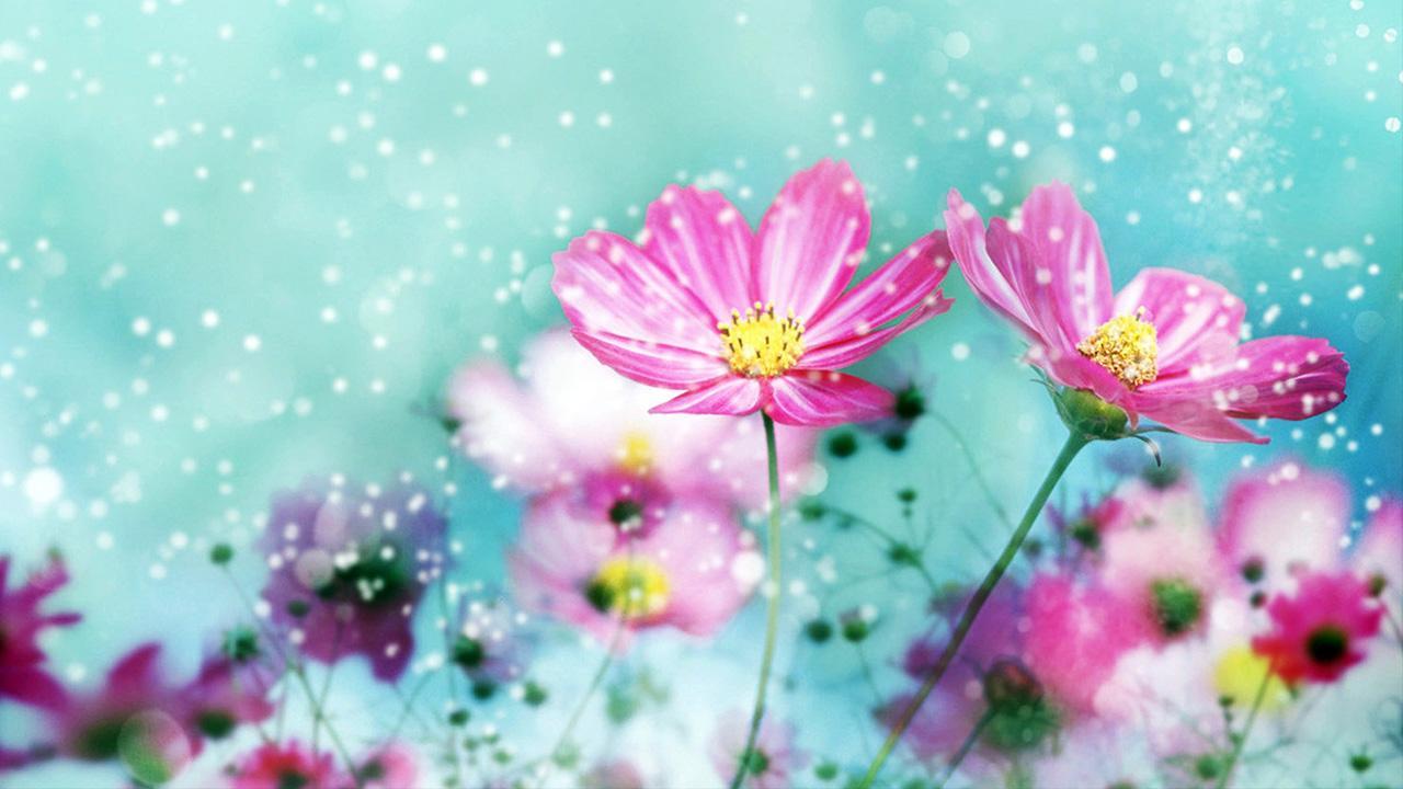 Flores Horizontales Dibujos Animados Patrón De Fondo: Imágenes De Flores Lindas Para Compartir Con Mis Amigos