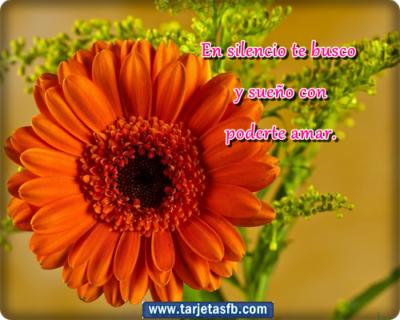 Imágenes de flores lindas frases