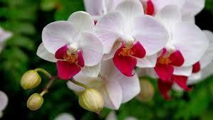 Imagenes de flores naturales bonitas