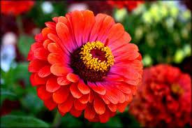 Imagenes de flores naturales