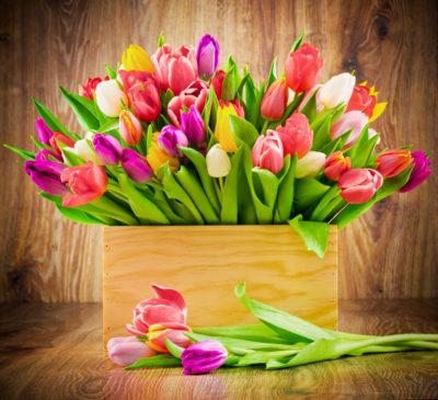 imágenes de flores d colores para una mujer