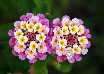 imágenes d flores de colores para una mujer especial