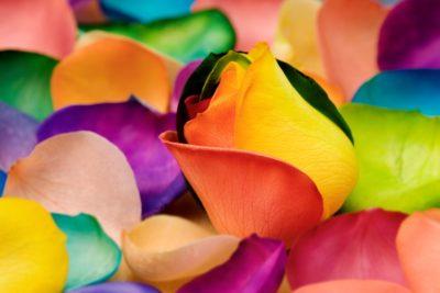 imágenes de flores de olores bellas y diferentes
