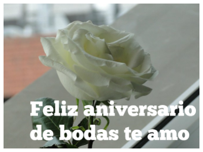 flores blancas para un aniversario de bodas