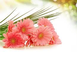 fondos de flores hermosas de amor