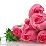 Fondos De Flores Hermosas Para Descargar Gratis