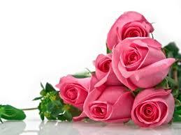 fondos de flores hermosas  de rosas