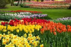 fondos de flores hermosas naturales