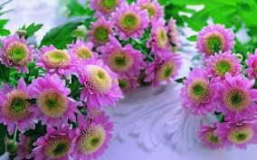 fondos de flores hermosas