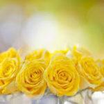 Imágenes Para Fondos De Pantalla De Rosas Para El Celular
