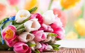 fondos de pantalla de rosas de colores