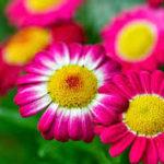 Fotos De Flores Bonitas Para Sorprender A Mi Novia