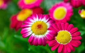 fotos de flores bonitas para bodas
