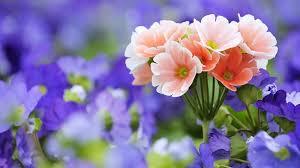 fotos de flores bonitas para cumpleaños