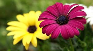 fotos de flores hermosas para mi amiga