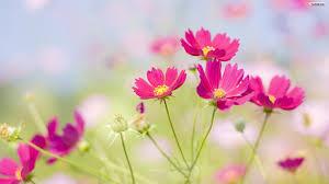 fotos de flores hermosas para mi cumpleaños