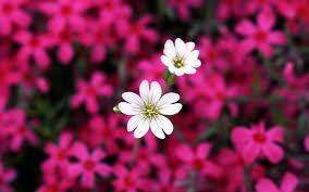 fotos de flores hermosas para mi hermana