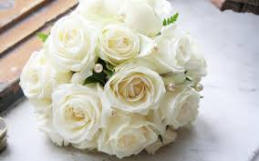 fotos de rosas blancas para mi esposa