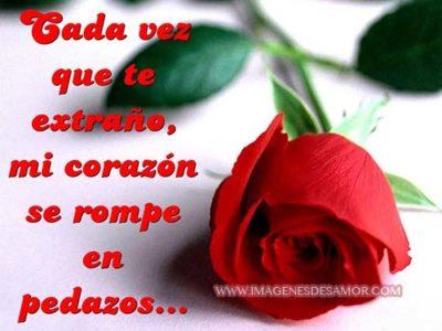 imágenes de amor con flores  rojas