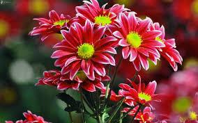 imágenes de flores para descargar gratis