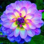 Hermosas Imágenes De Flores Para Descargar Y Compartir