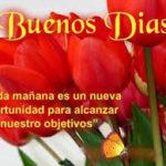 Imágenes De Flores Con Frases Bonitas Para Buenos Días