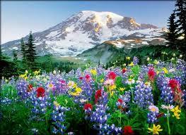 imagenes de flores gratis  para celular