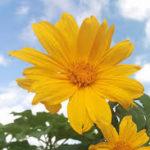 Hermosas Imágenes De Flores Para Fondo De Pantalla Del Celular