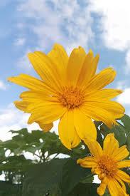 imagenes de flores para fondo de pantalla bonitas