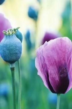 imagenes de flores para fondo de pantalla grandes
