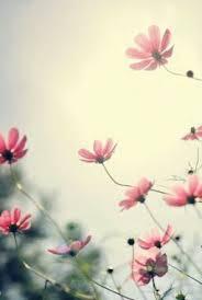 imagenes de flores para fondo de pantalla hd