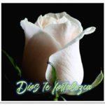 Mira Estas 5 Imágenes De Rosas Blancas Con Frases De Luto