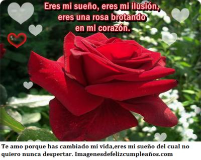 imagenes de rosas rojas hermosas con frases de amor