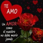 Imágenes De Rosas Rojas Preciosas Con Frases Bonitas