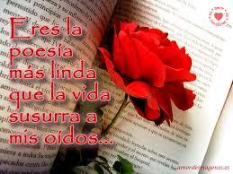 imagenes de rosas rojas preciosas para enamorar