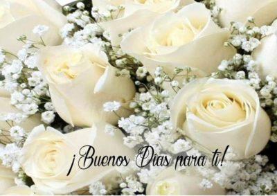imagenes-de-rosas-blancas-con-frases-de-buenos-dias