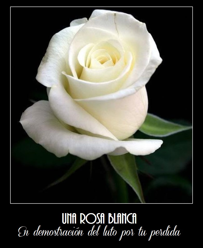 Las Mejores Imágenes De Rosas Blancas Para Luto Imágenes