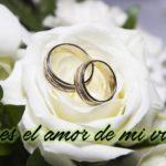 Hermosas Imágenes  De Rosas Blancas Con Frases Para Todos