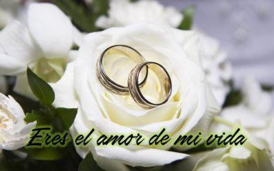 imagenes-de-rosas-blancas-con-frases-de-amor