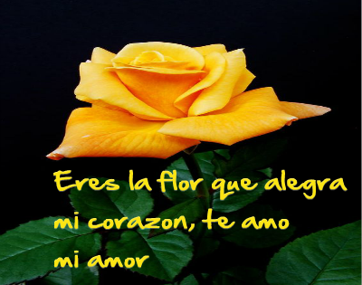 flores amarillas con frases de amor