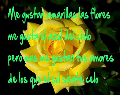 flores amarillas con frases para enamorar